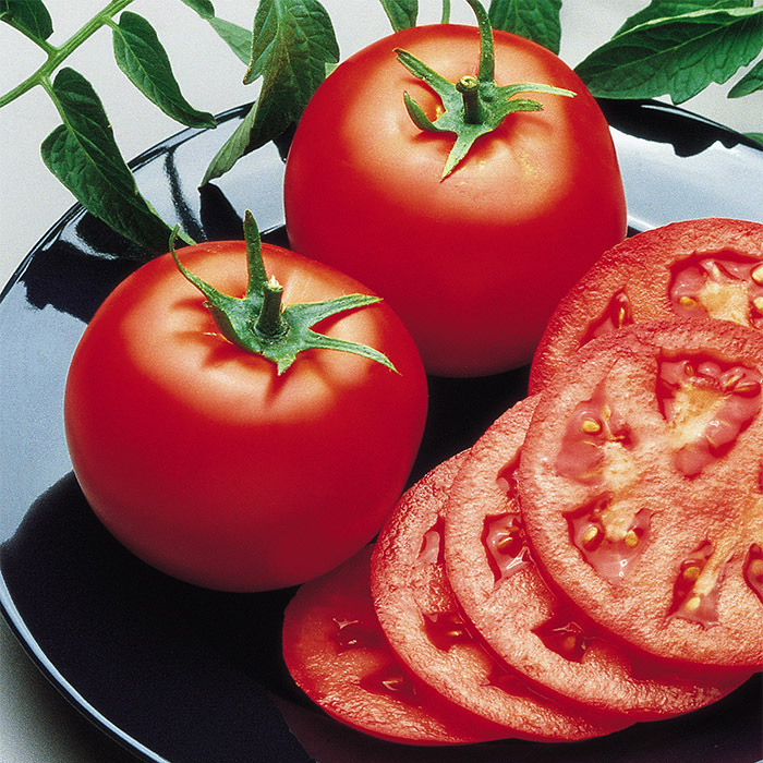 Goliath Bush Hybrid Tomato