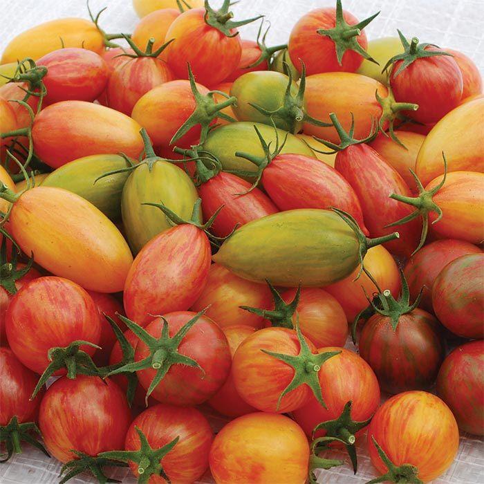 Artisan Mix Tomato