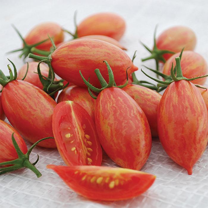 Artisan Tiger Pink Tomato