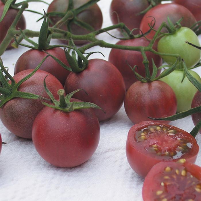 Chocolate Cherry Tomato