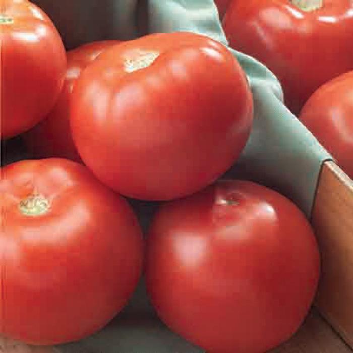 Florida 47 Hybrid Tomato