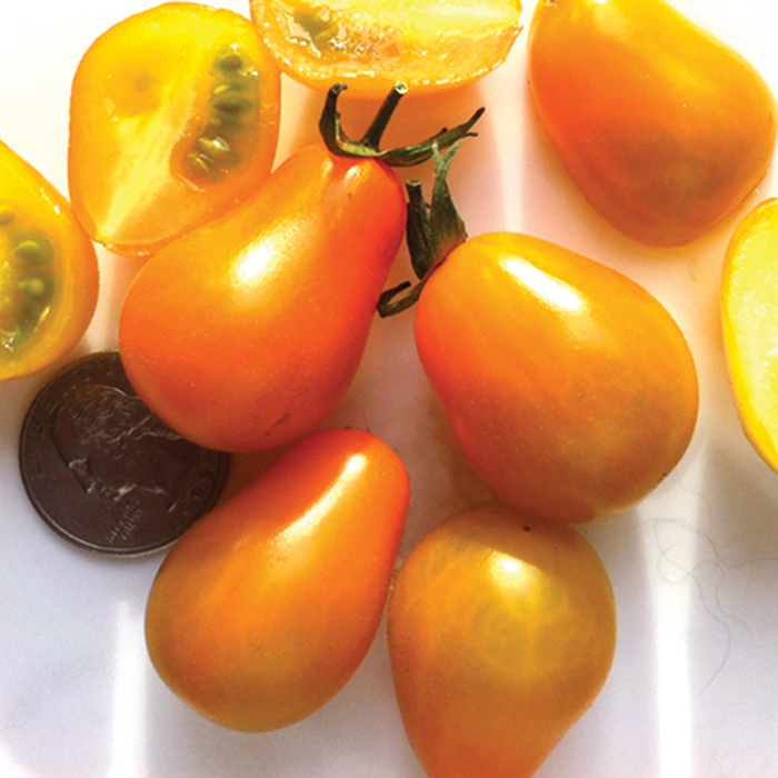 Flaming Burst Tomato