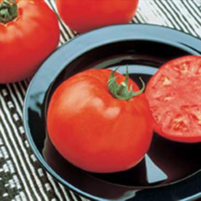 Jetsetter Hybrid Tomato