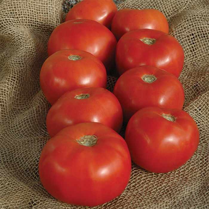 Mountain Majesty Hybrid Tomato