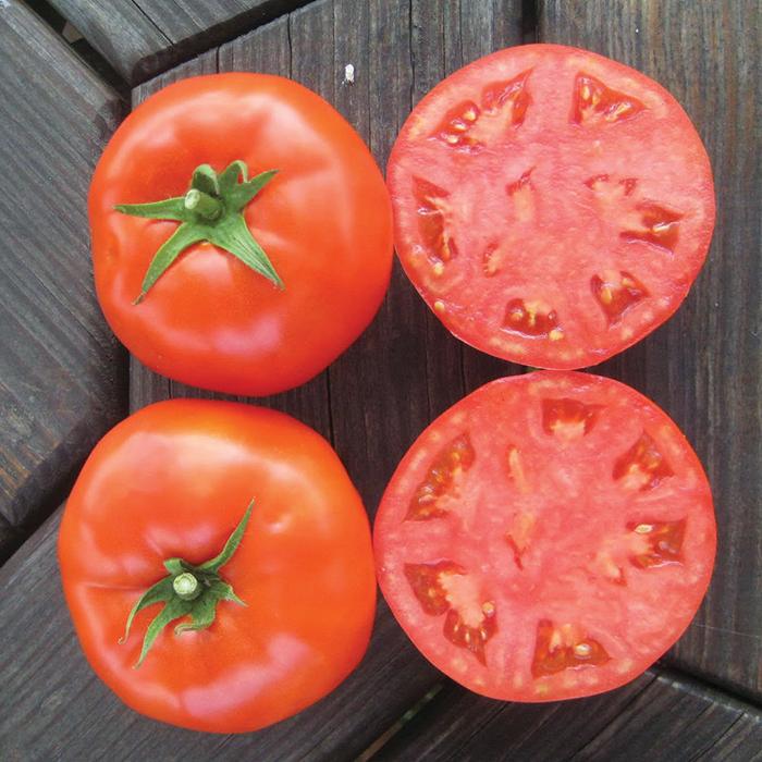 Mountain Merit Hybrid Tomato