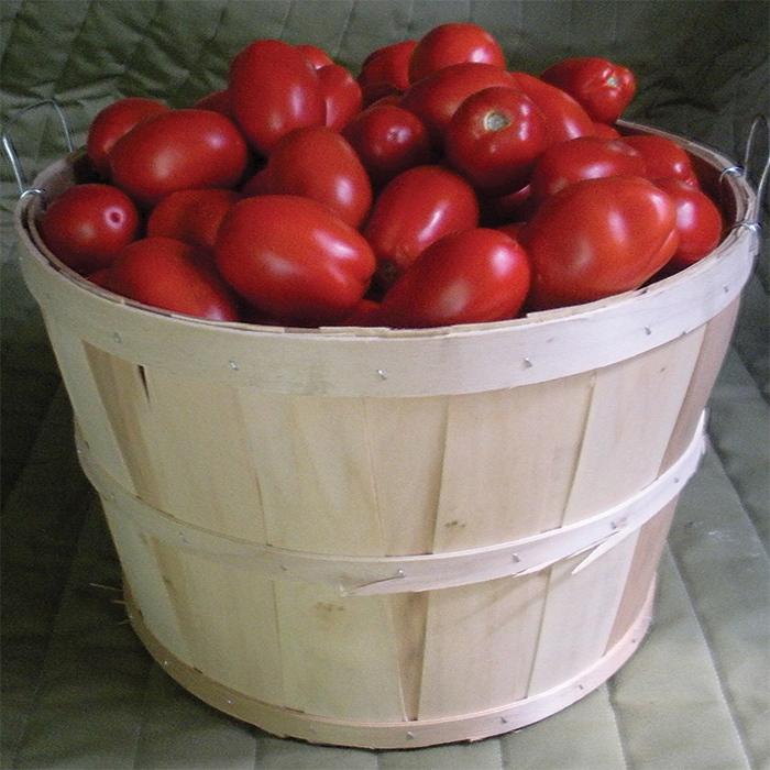 Plum Regal Hybrid Tomato