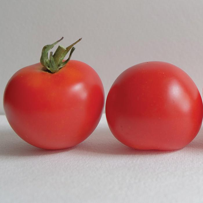 Red Racer Hybrid Tomato