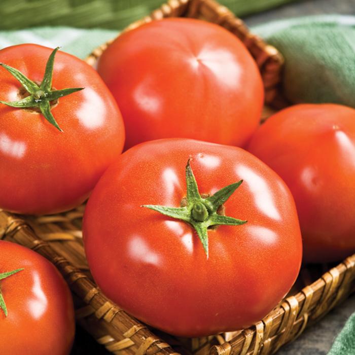 Rugged Boy Hybrid Tomato