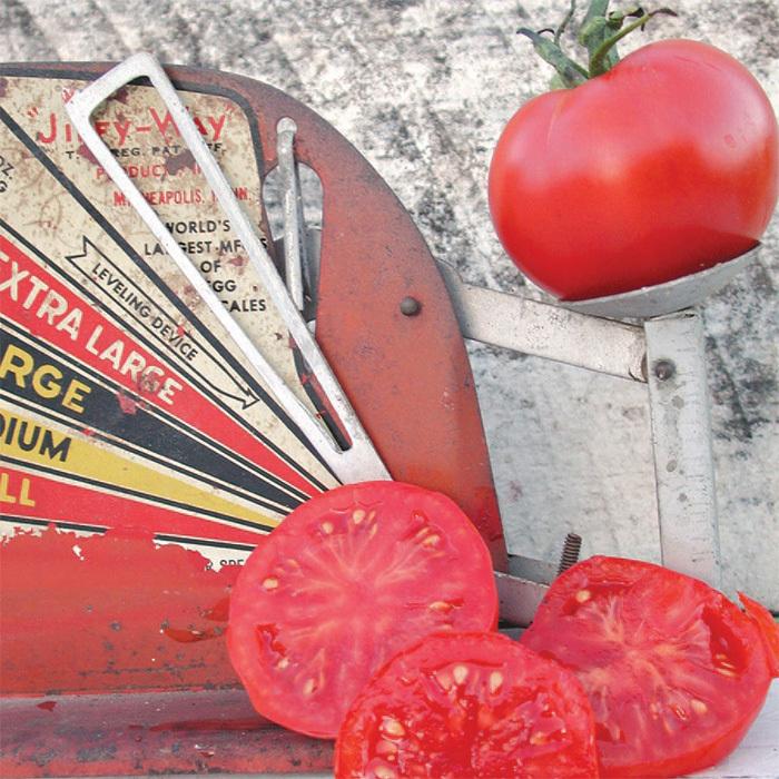 Slava Tomato