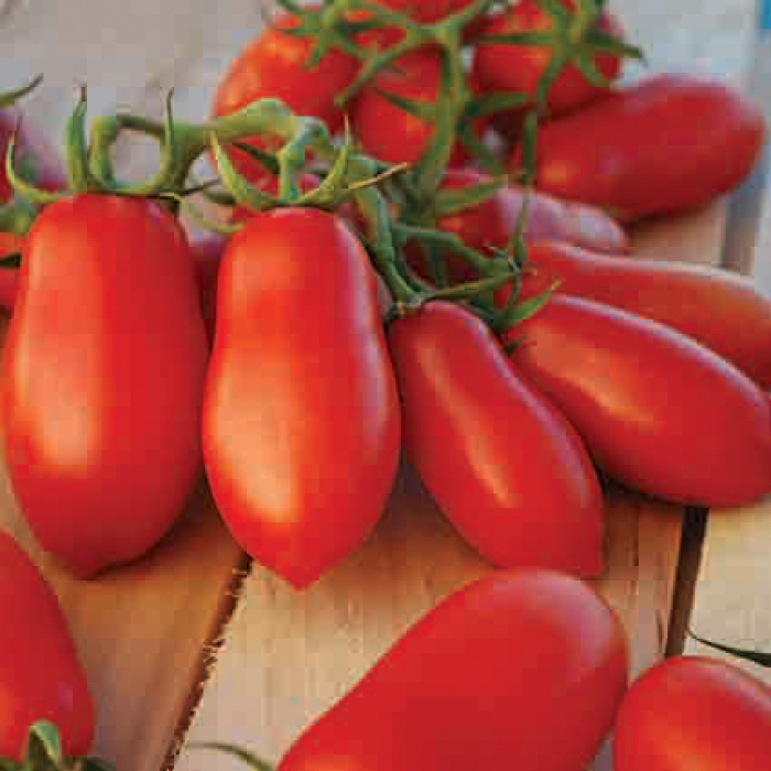 Ten Fingers Of Naples Tomato