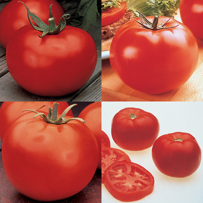 4 Best Hybrids Tomato Collection