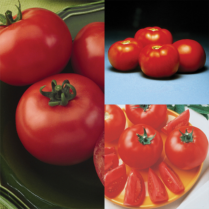 Container Tomato Collection