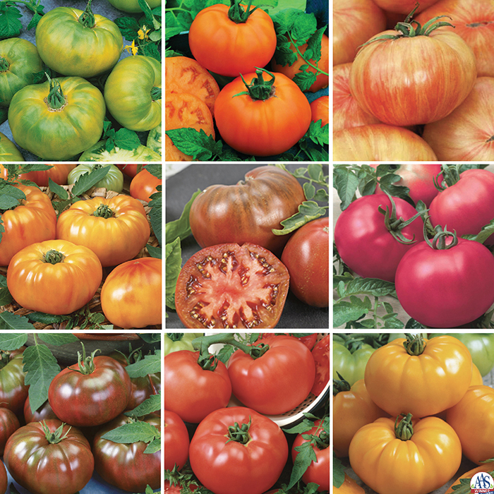 Chef's Choice Tomato Collection