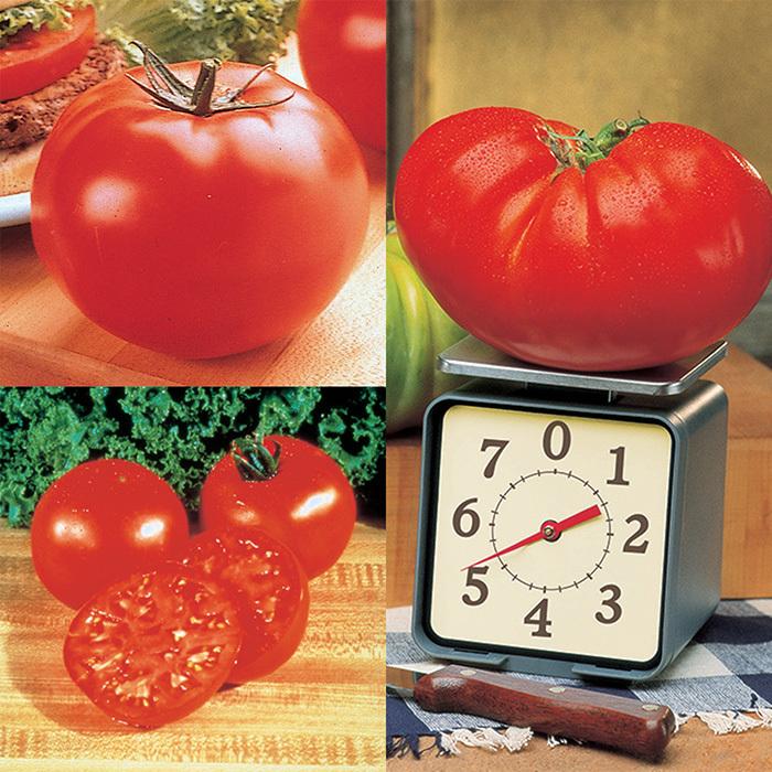 Big Tomato Collection