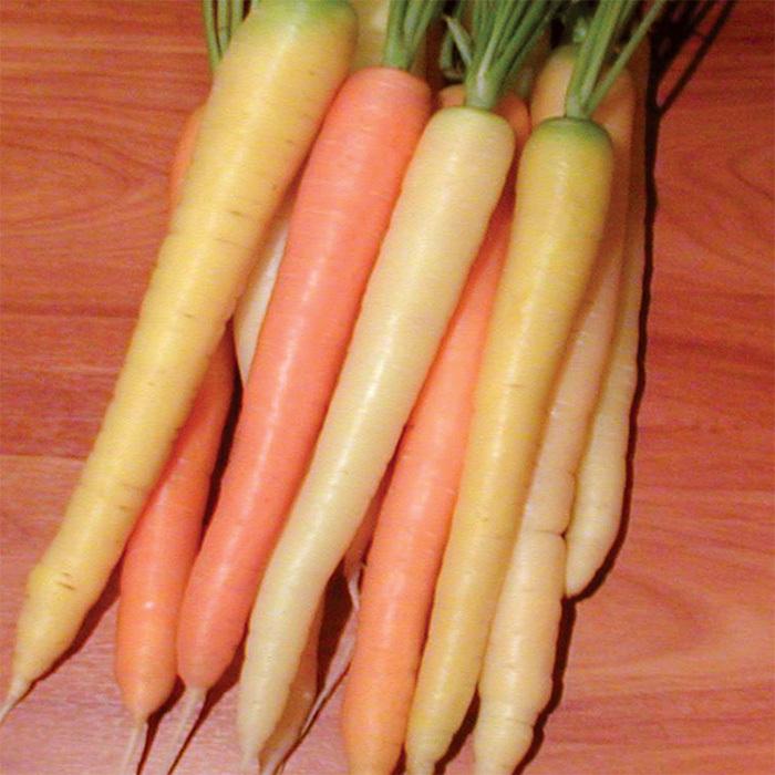 Rainbow Hybrid Carrot