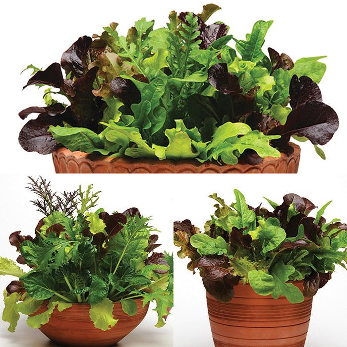 Simply Salad Mixes