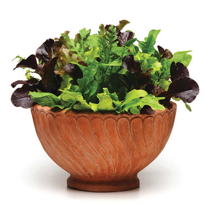 Simply Salad Alfresco Mix Mesclun Mix