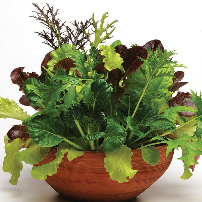 Simply Salad City Garden Blend Mesclun Mix