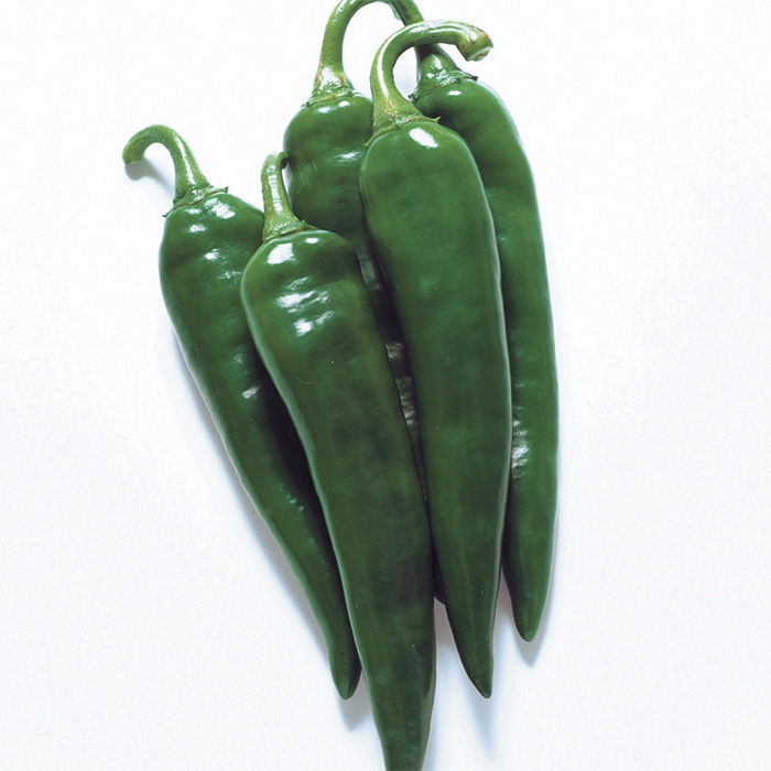 Minero Hybrid Pepper