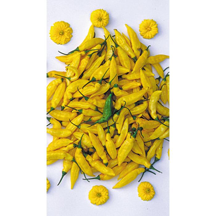 Lemon Drop Pepper