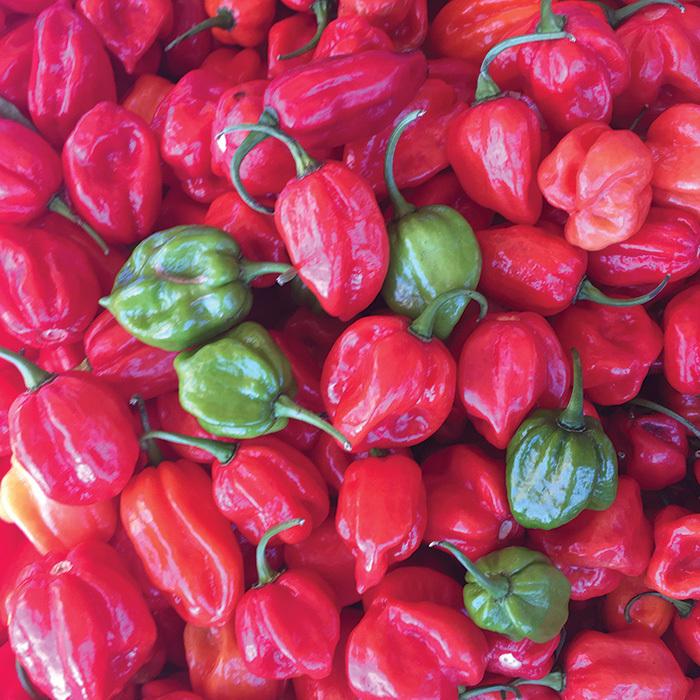 Aji Dulce #2 Habanero Pepper
