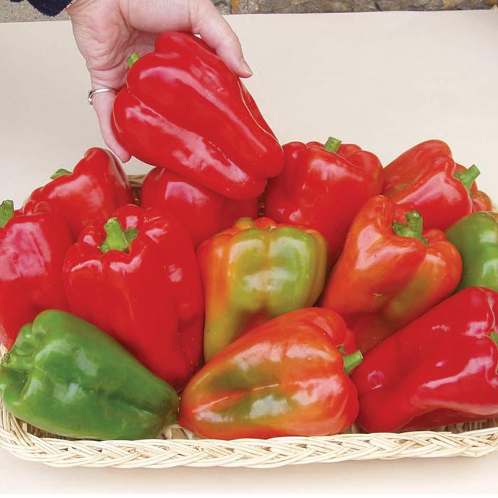 Margarets Pepper