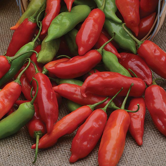 Aji Rico Hybrid Pepper
