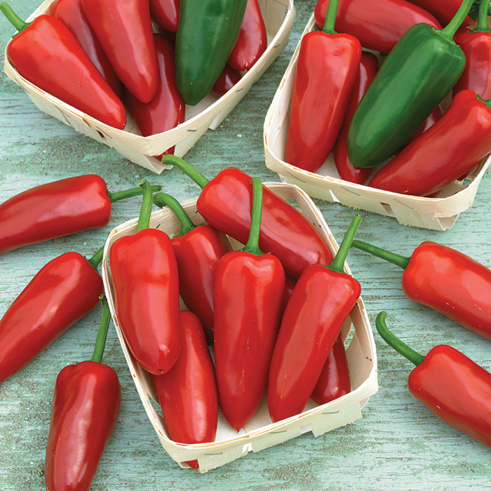 Hernandez Hybrid Fresno Pepper