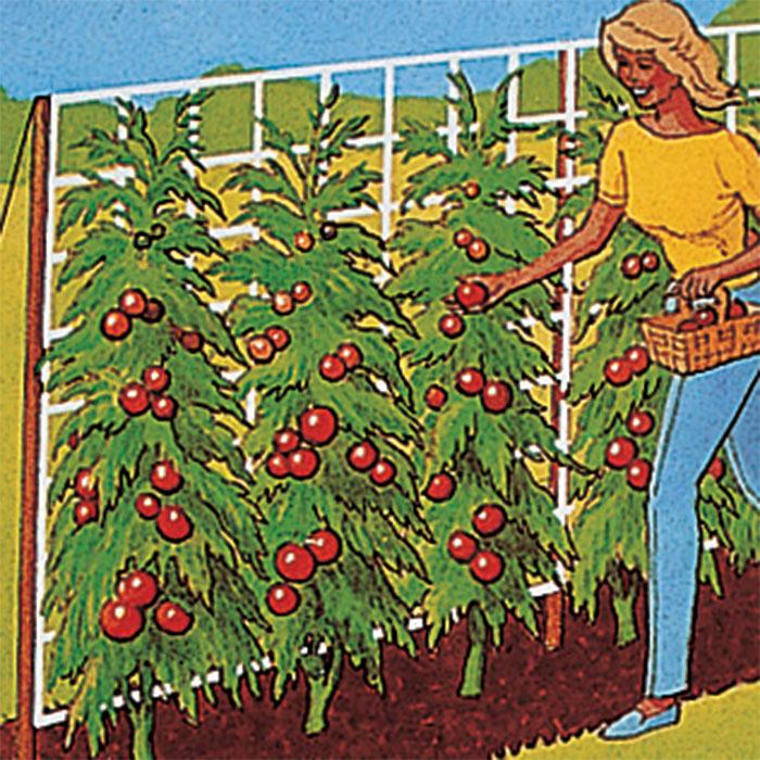5 Foot X 15 Foot Tomato Trellis