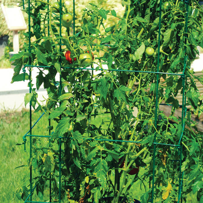 Jumbo Green Tomato Cages