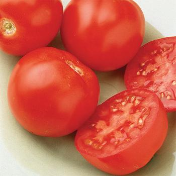Early Hybrid Goliath Tomato