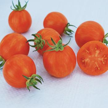 Apricot Zebra Tomato