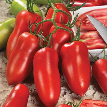 Andiamo Hybrid Tomato