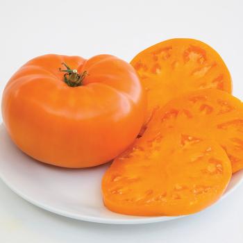 Brandywine Orange Tomato