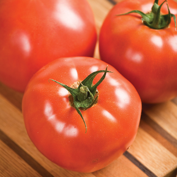 Celebrity Hybrid Tomato