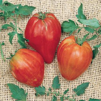 Cuore De Toro Tomato