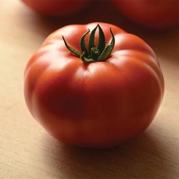 Heirloom Marriage Genuwine Hybrid Tomato