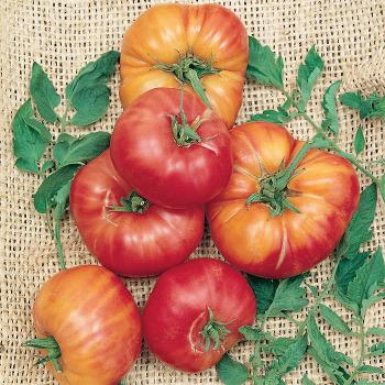 German Johnson Pink Tomato