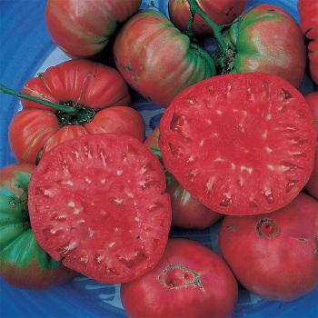 Giant Belgium Tomato