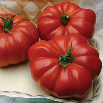 Grandmas Pick Hybrid Tomato