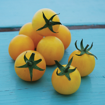 Hartman's Yellow Gooseberry Tomato