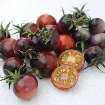 Indigo Blue Berries Tomato