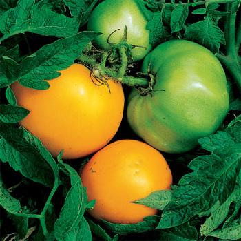 Nebraska Wedding Tomato