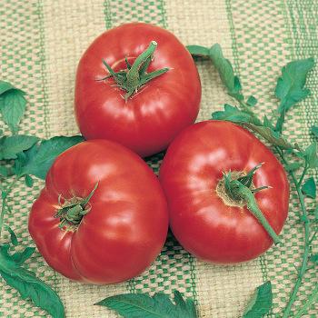 Parks Whopper Improved Hybrid Tomato
