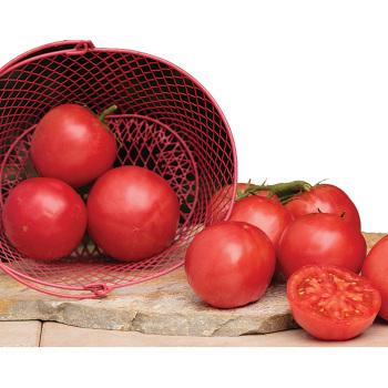 Pink-A-Licious Hybrid Tomato