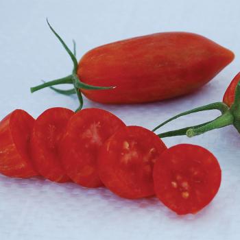 Prairie Fire Tomato