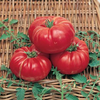 Soldacki Tomato