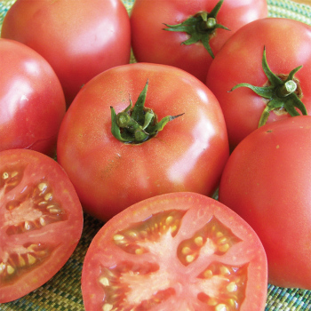 Truckers Favorite Tomato