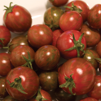 Zebra Cherry Hybrid Tomato