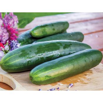 Goliath Hybrid Cucumber
